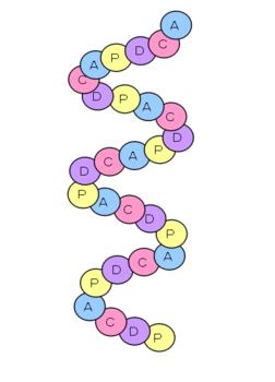 PDCA螺旋.PNG